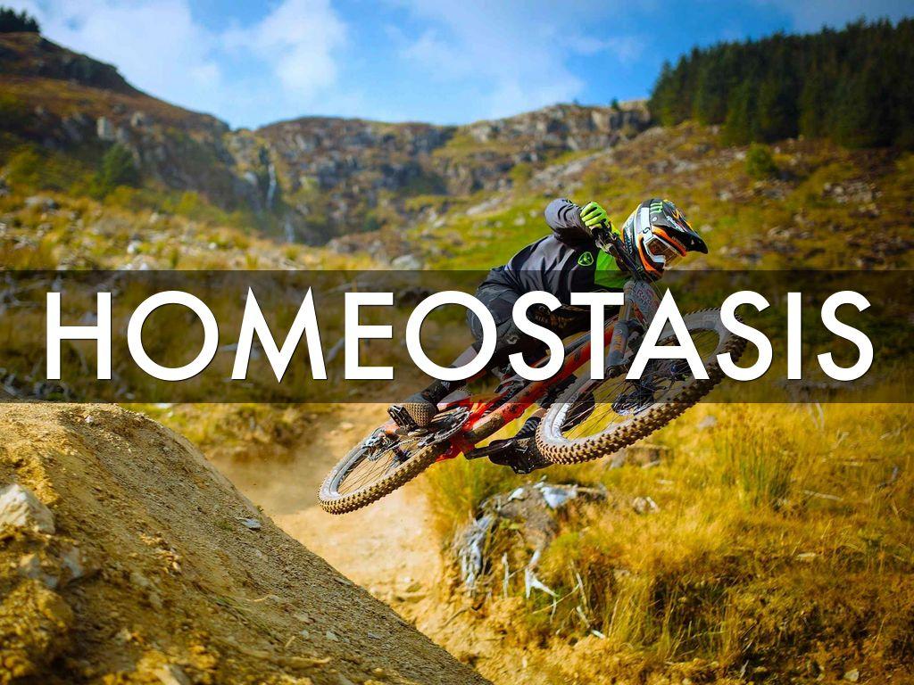 Homeostasis by Sarah Jones 1024x768