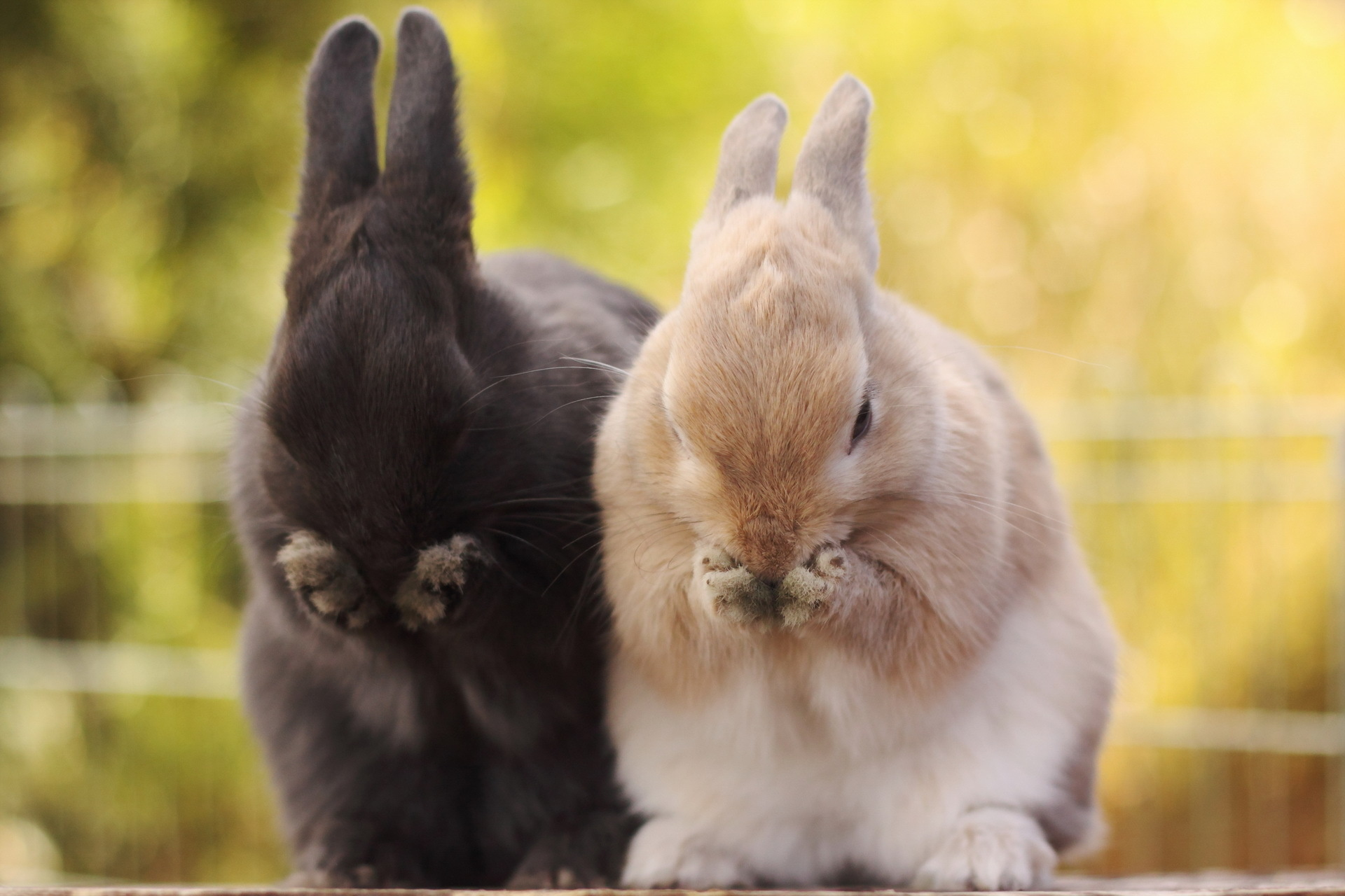 Rabbits images Bunnies HD fond dcran and background photos 1920x1280
