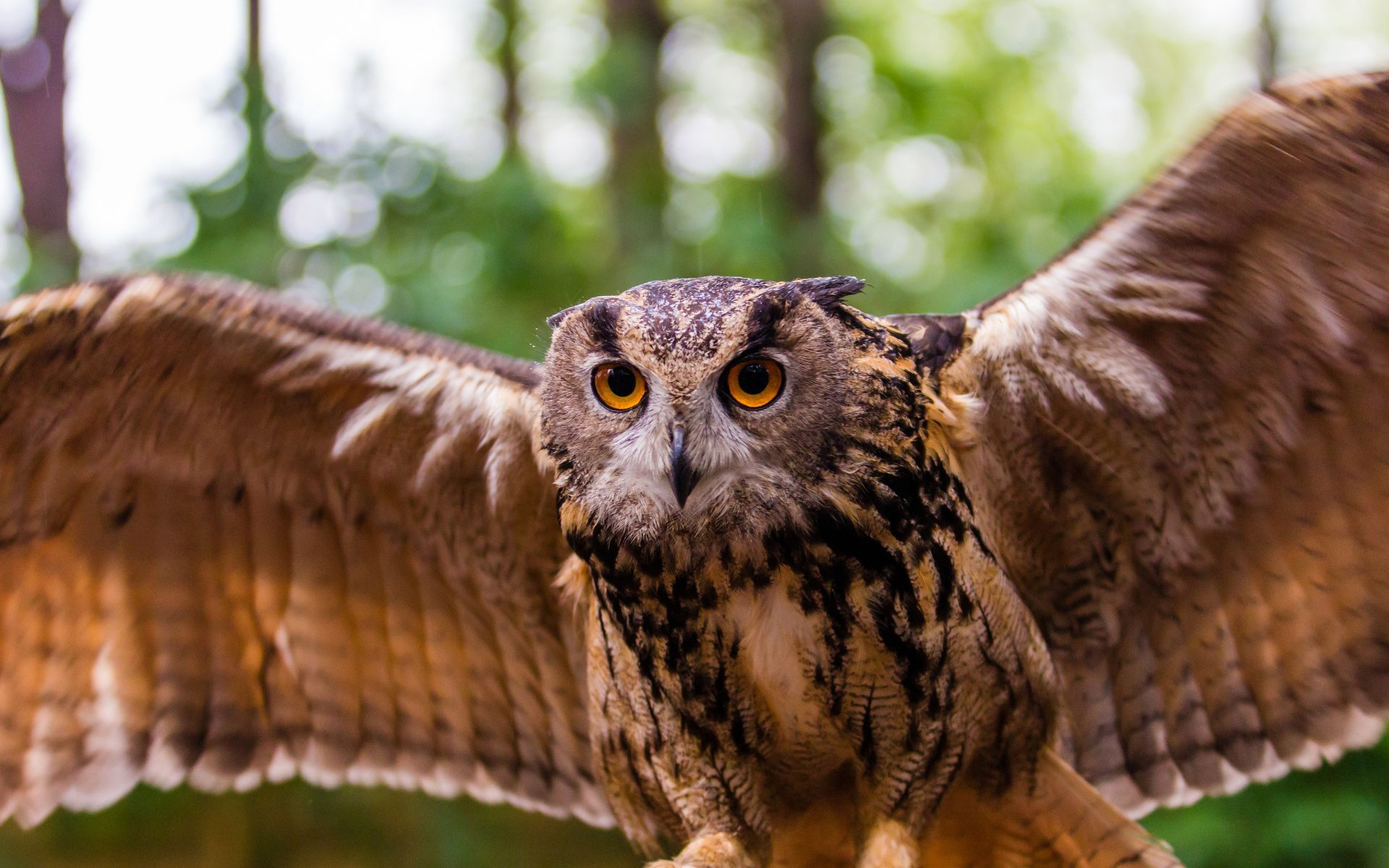 Flying owl HD Wallpaper 1920x1080 Flying owl HD Wallpaper 1920x1200 1920x1200