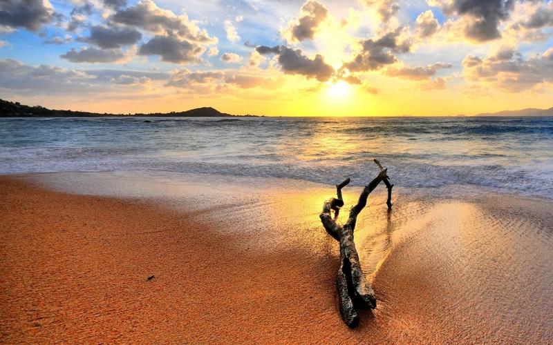 sunrise ocean wood logs Nature Oceans HD Desktop Wallpaper 800x500