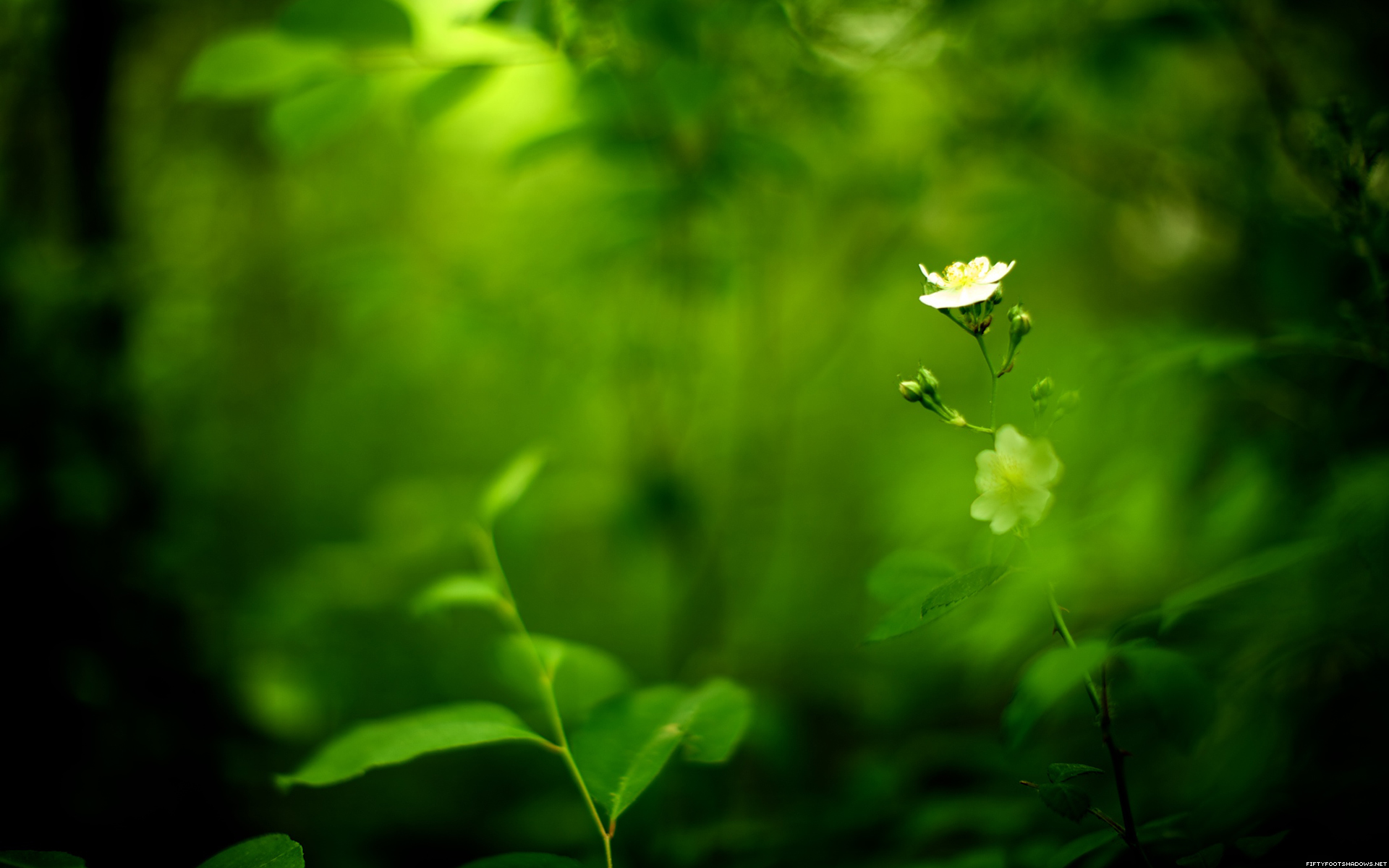 Green Nature Flowers Wallpaper 1920x1200