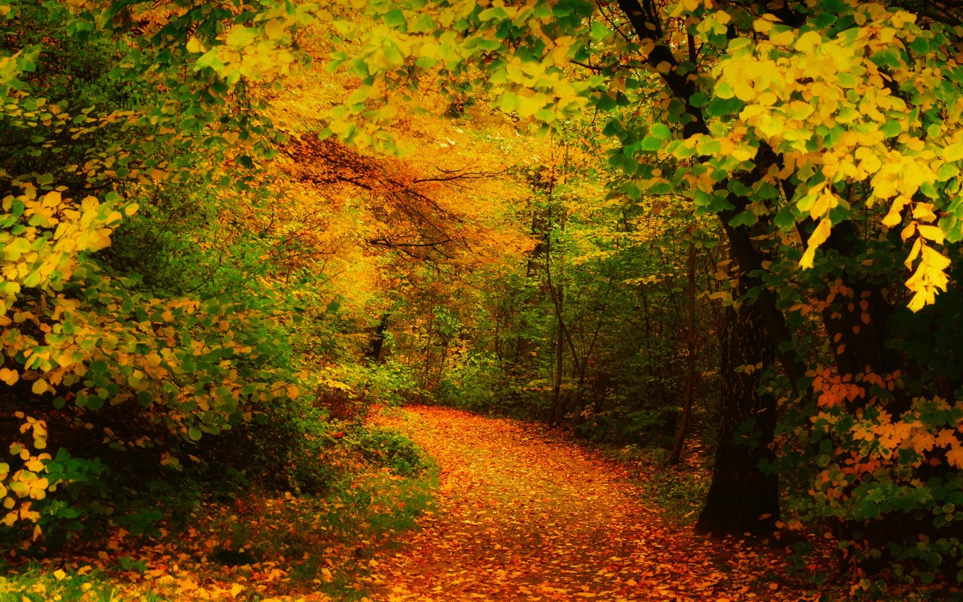 Осень листва лес  № 3162832 без смс