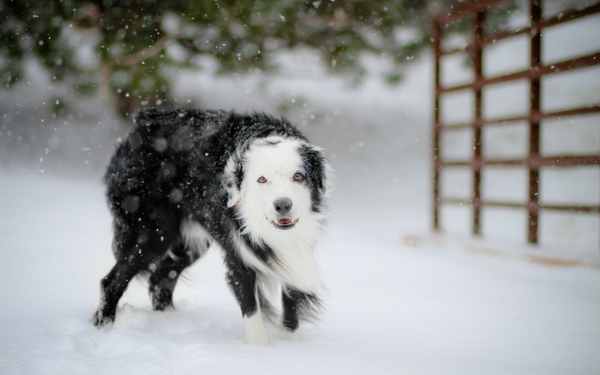 winteranimals winter animals dogs Dogs Wallpapers 600x375