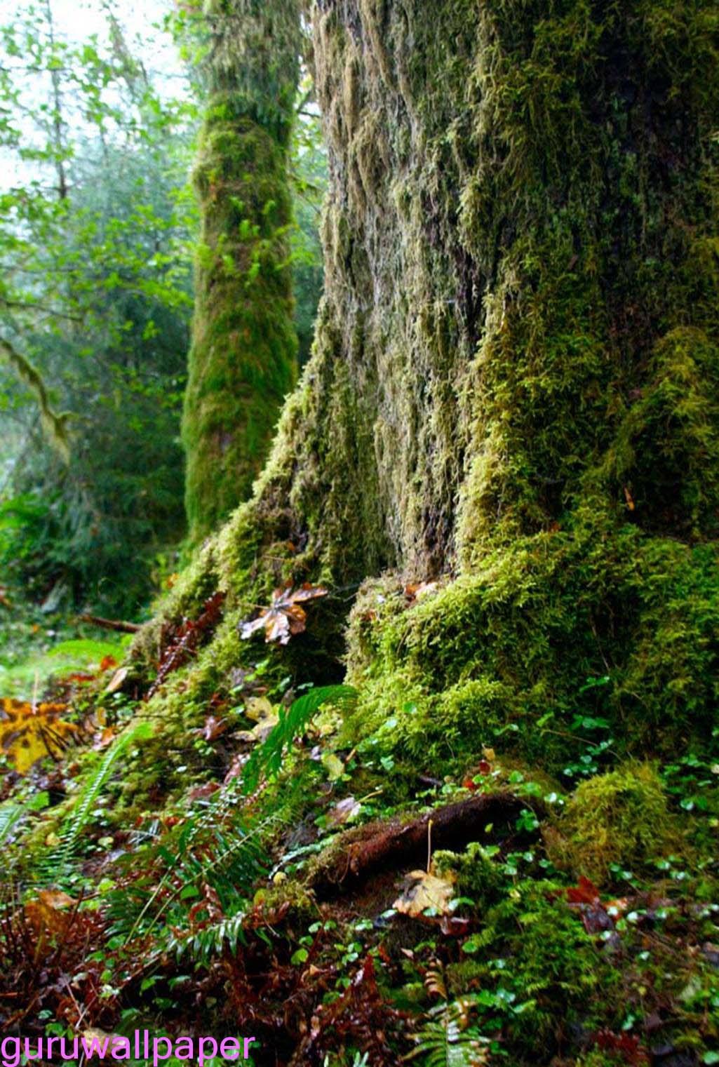 Nature Rain Wallpaper Wallpapersafari