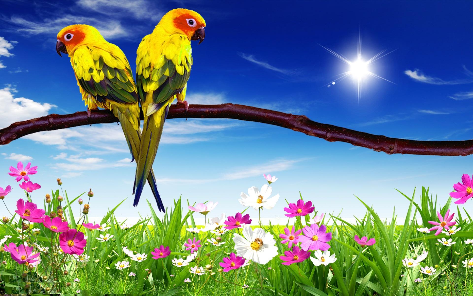 природа животные птицы попугаи  № 103598 бесплатно