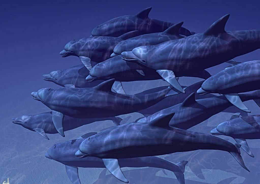 3D Desktop Wallpaper Dolphins   wwwwallpapers in hdcom 1023x726