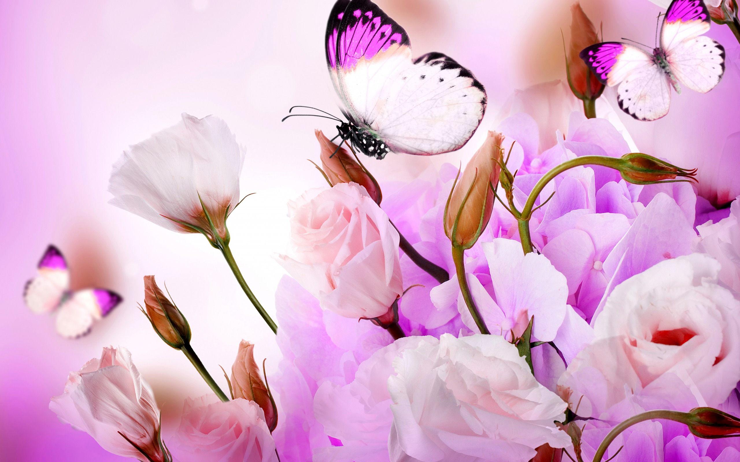 Flowers and butterflies wallpaper   SF Wallpaper 2560x1600