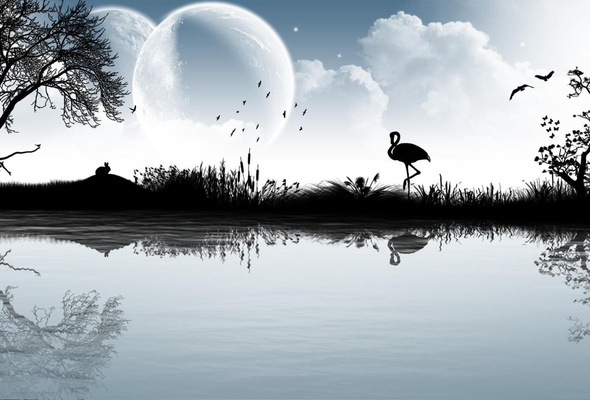 Wallpaper moon flamingo river tree silhouette reflection desktop 590x400