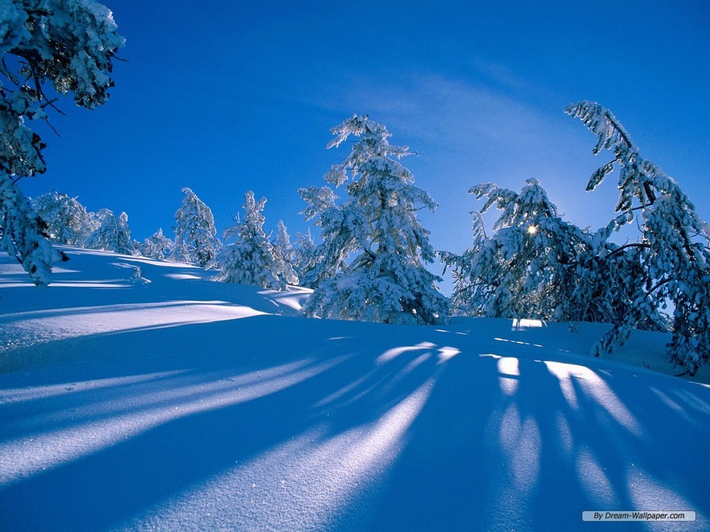 Wallpaper   Nature wallpaper   Winter Wonderland 1 1024x768