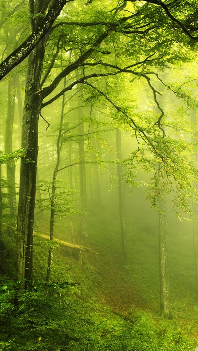 Forest Iphone Wallpaper Wallpapersafari