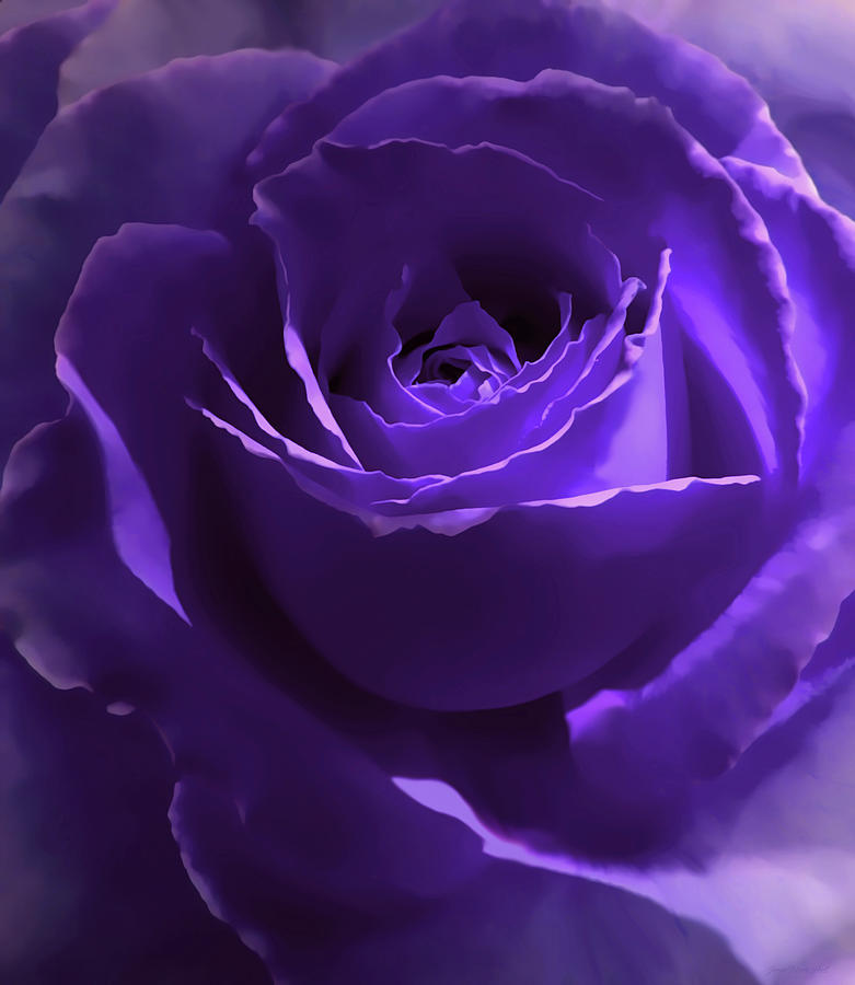 Purple Roses Background Images: Dark Purple Roses Wallpaper