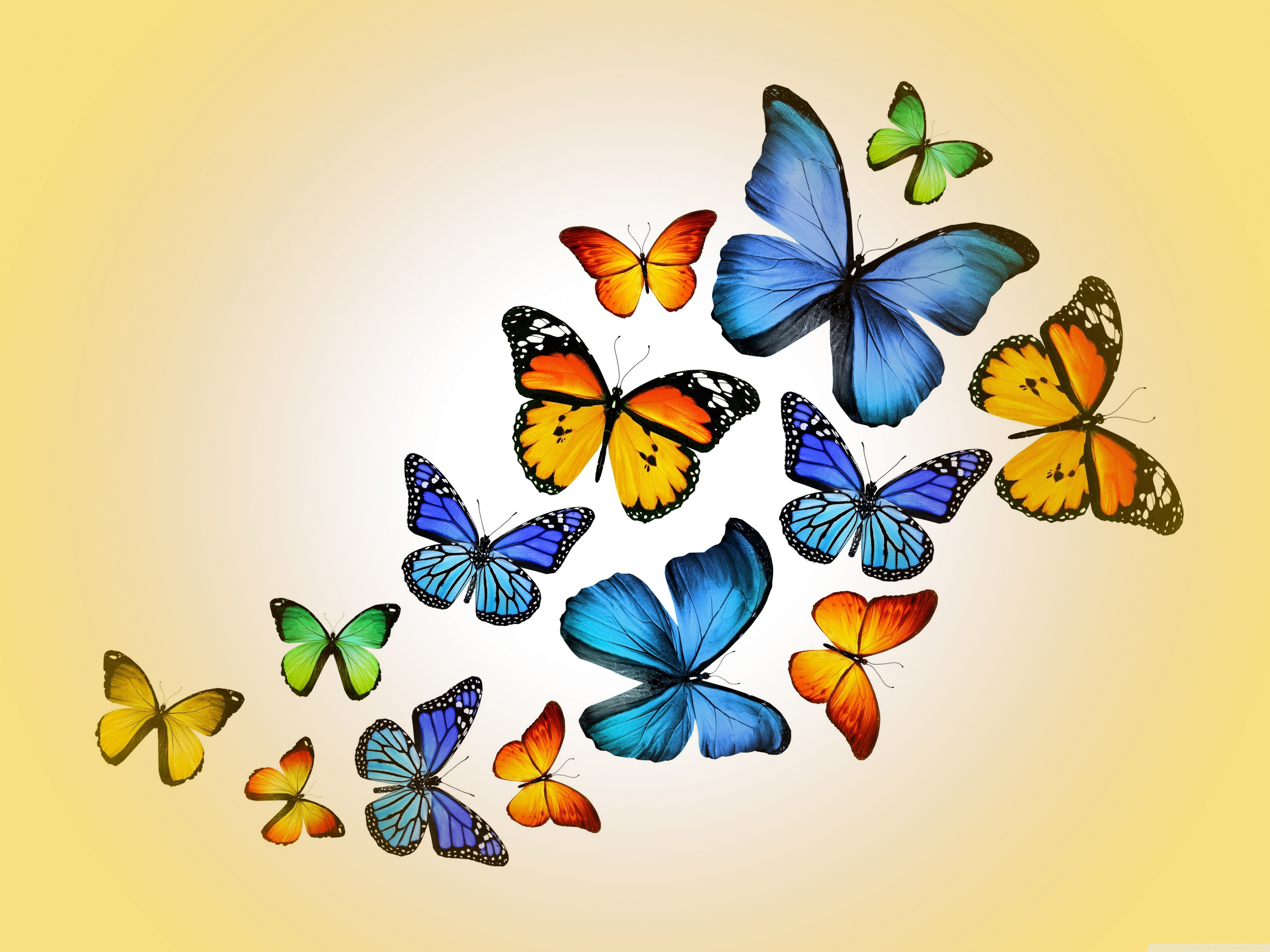 Butterflies 4K HD Desktop Wallpaper for 4K Ultra HD TV Wide 4096x3072