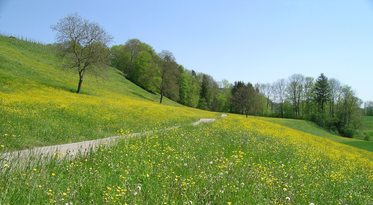Spring Meadow Scenery Wallpaper Wallpaper ME 1270x697