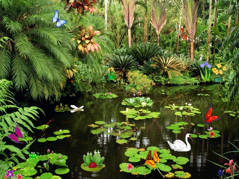Butterflies Screensaver   Butterflies Ponds   FullScreensavers 800x600