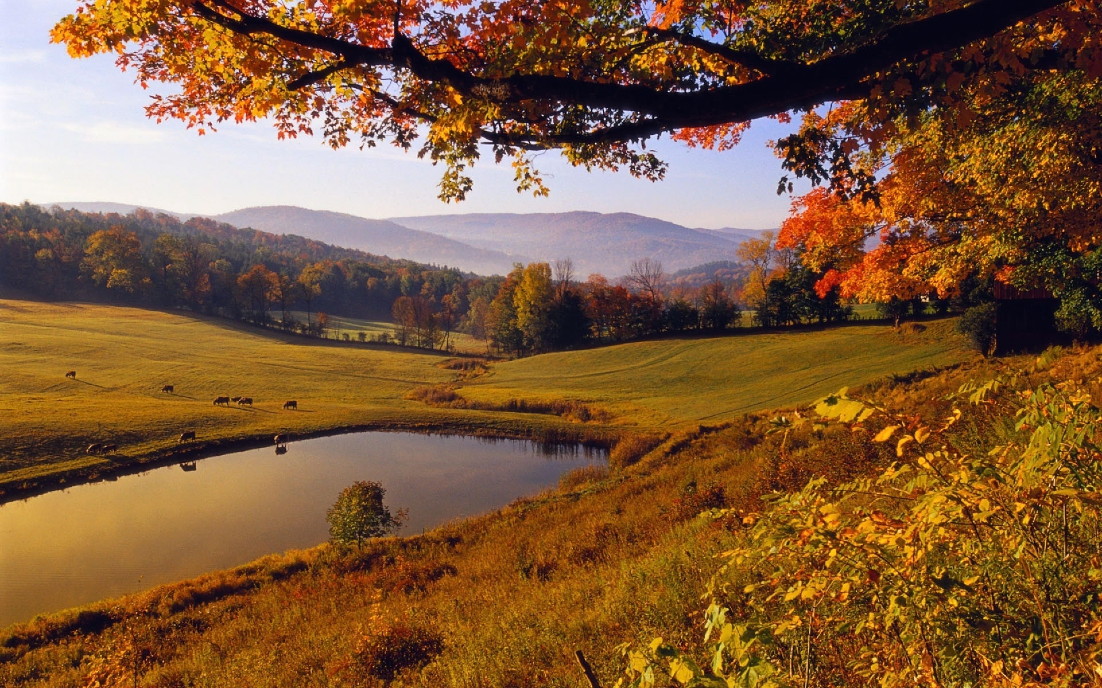 Картинки летний пейзажи 3