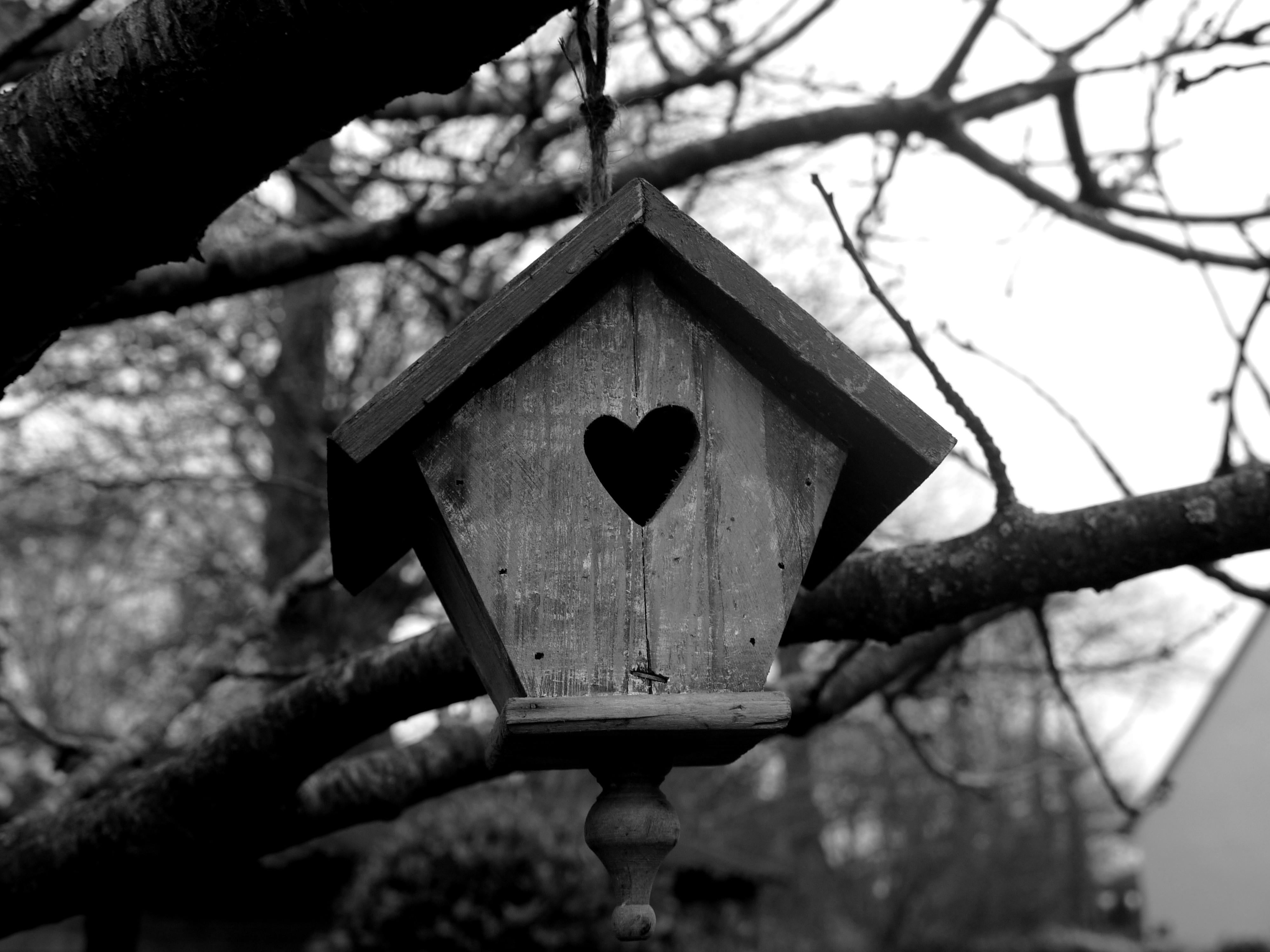 Bird house 4000x3000