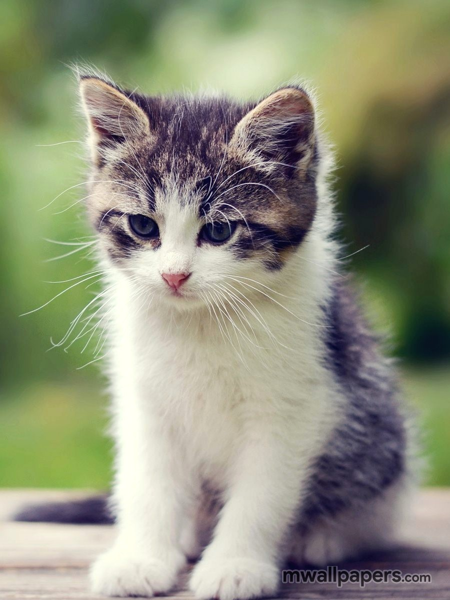[80] Cute Kitten Wallpaper HD 900x1200 2021 900x1200
