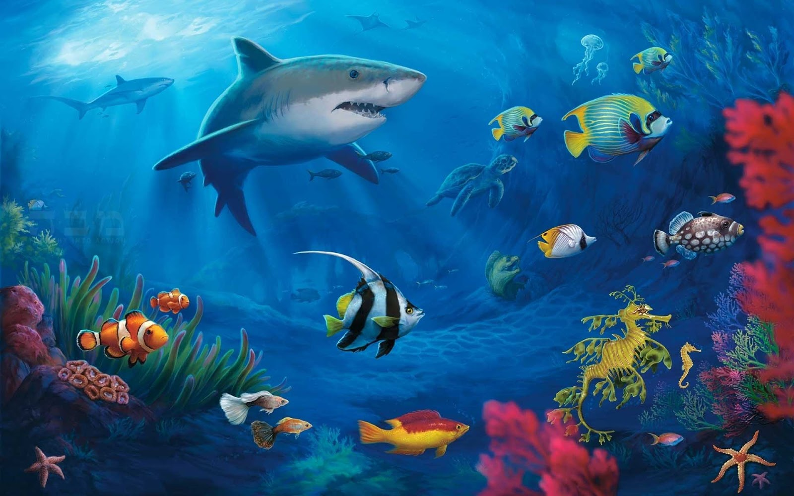 HD Wallpapers Desktop Ocean Life HD DeskTop Wallpapers 1600x1000
