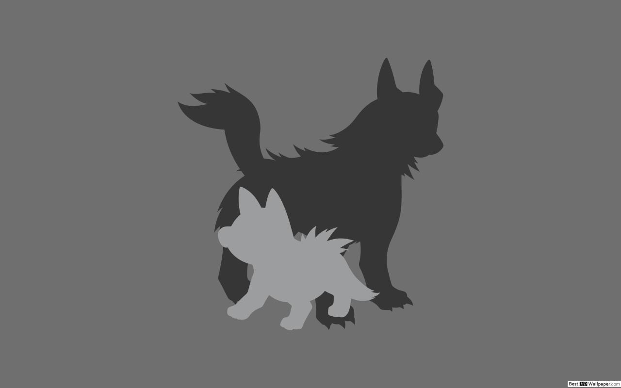 Mightyena and Poochyena of Pokemon HD wallpaper download 1280x800