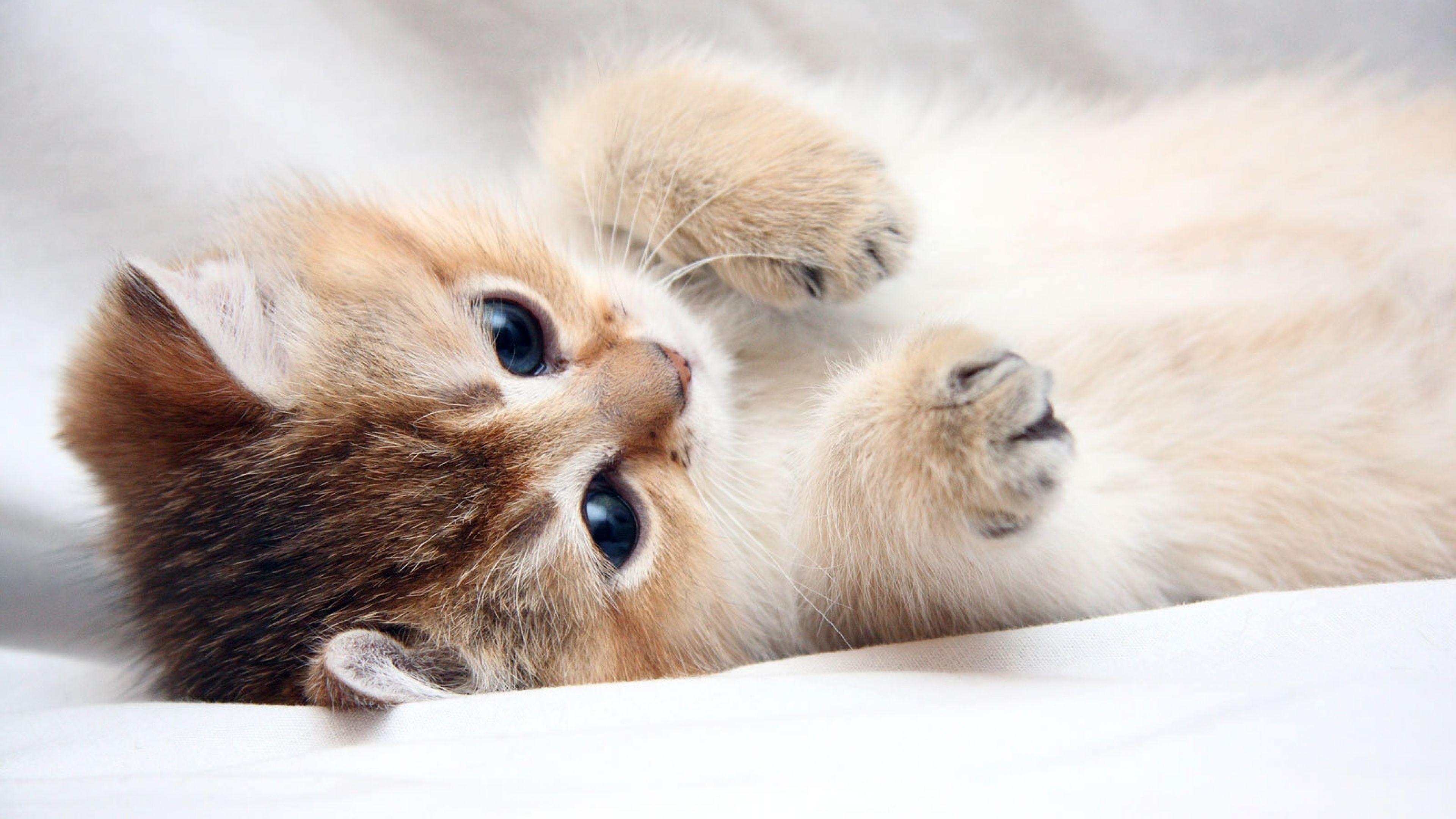 Cute Kittens 4k Wallpapers 3840x2160