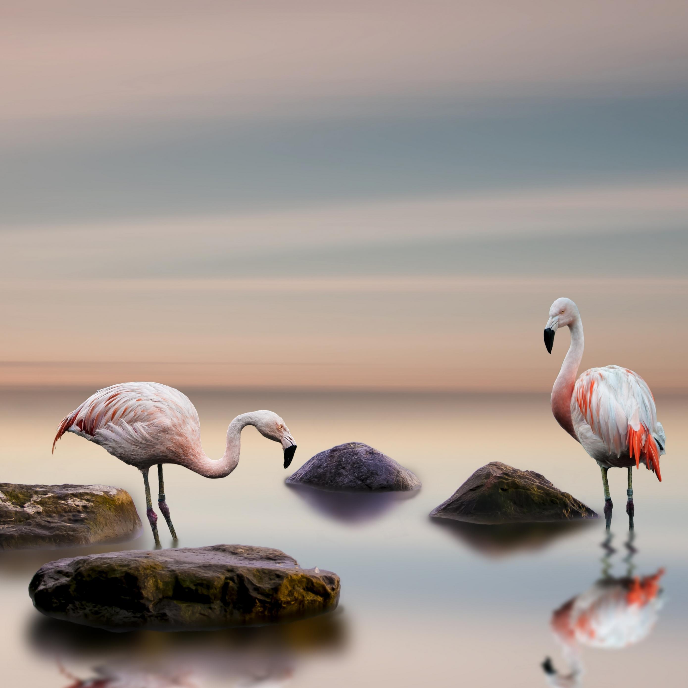 Download flamingo bird ocean 5k 27700 Apple iPad Air wallpaper 2780x2780