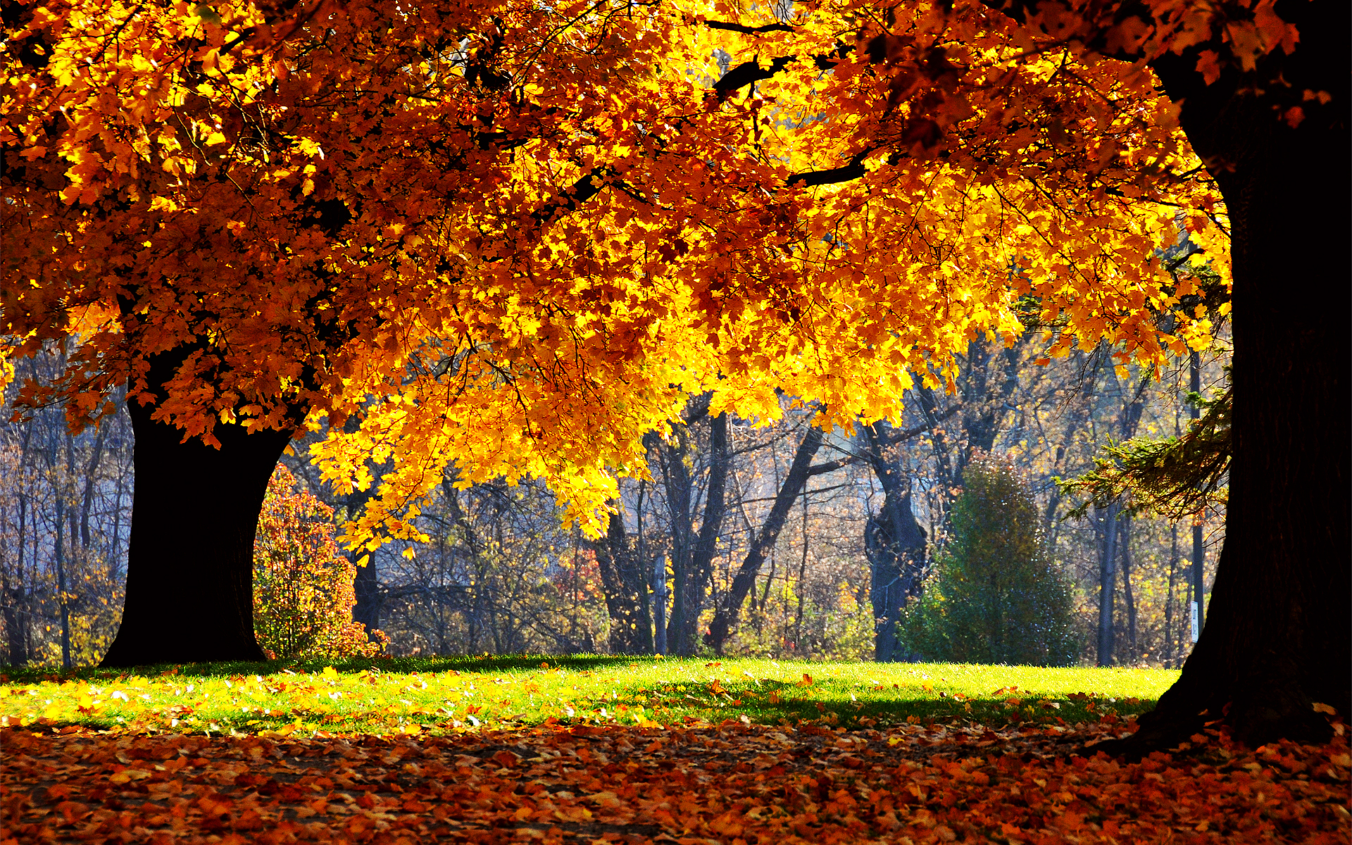 fall desktop wallpaper backgrounds   wwwwallpapers in hdcom 1920x1200
