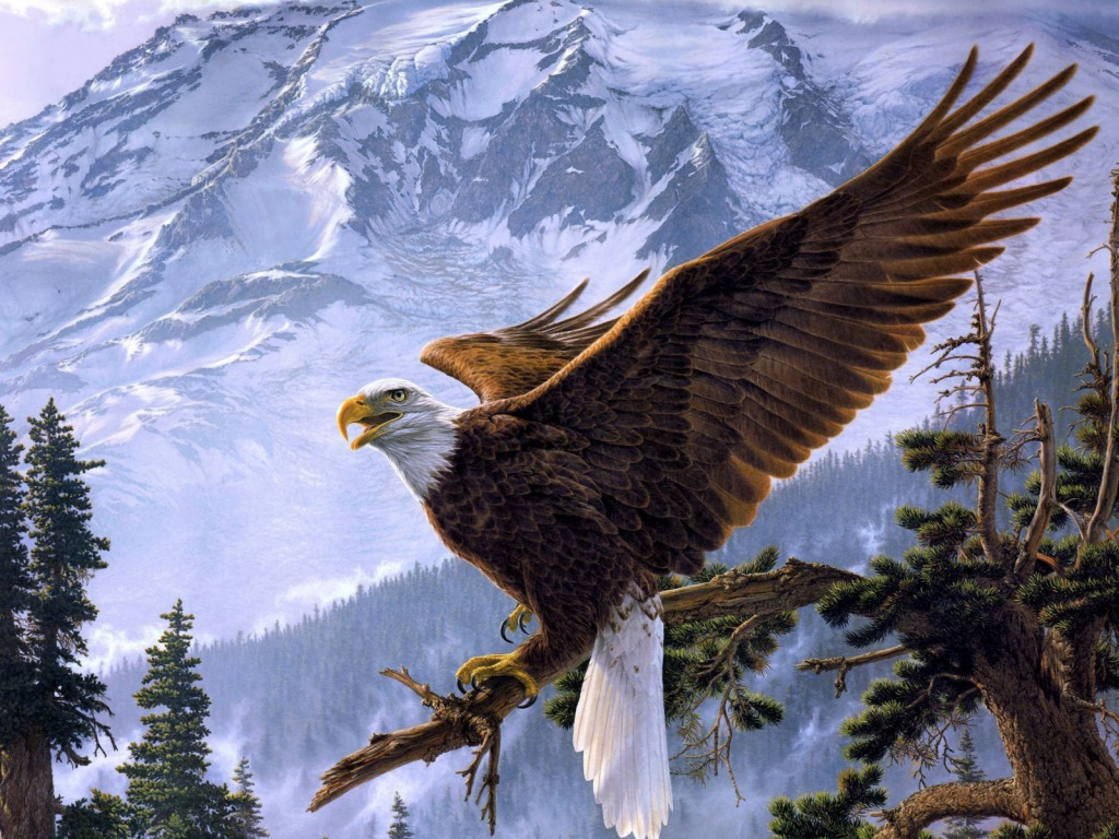 Eagle HD Wallpapers Desktop Pictures One HD Wallpaper Pictures 1024x768