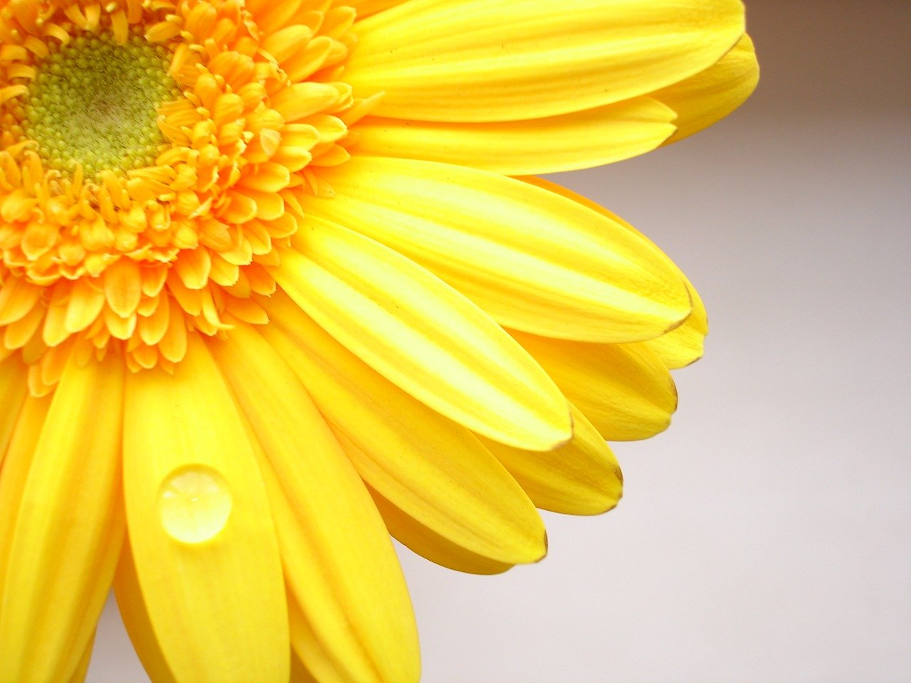 Free Download Yellow Color Flower Wallpaper 1280x960 For Your