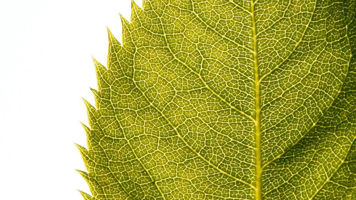 Free Download Leaf Hd Wallpaper Fondos 1080p Hd 1191x670 For Your Desktop Mobile Tablet Explore 46 Leaf Wallpaper Hd Fall Leaves Wallpaper For Desktop Fall Leaves Wallpaper Hd Fall