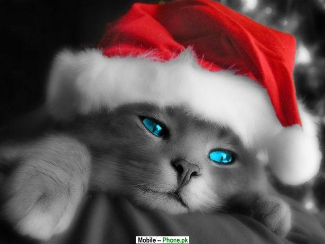 cute wallpapers for mobile phones Cute Christmas Cat Wallpaper 640x480