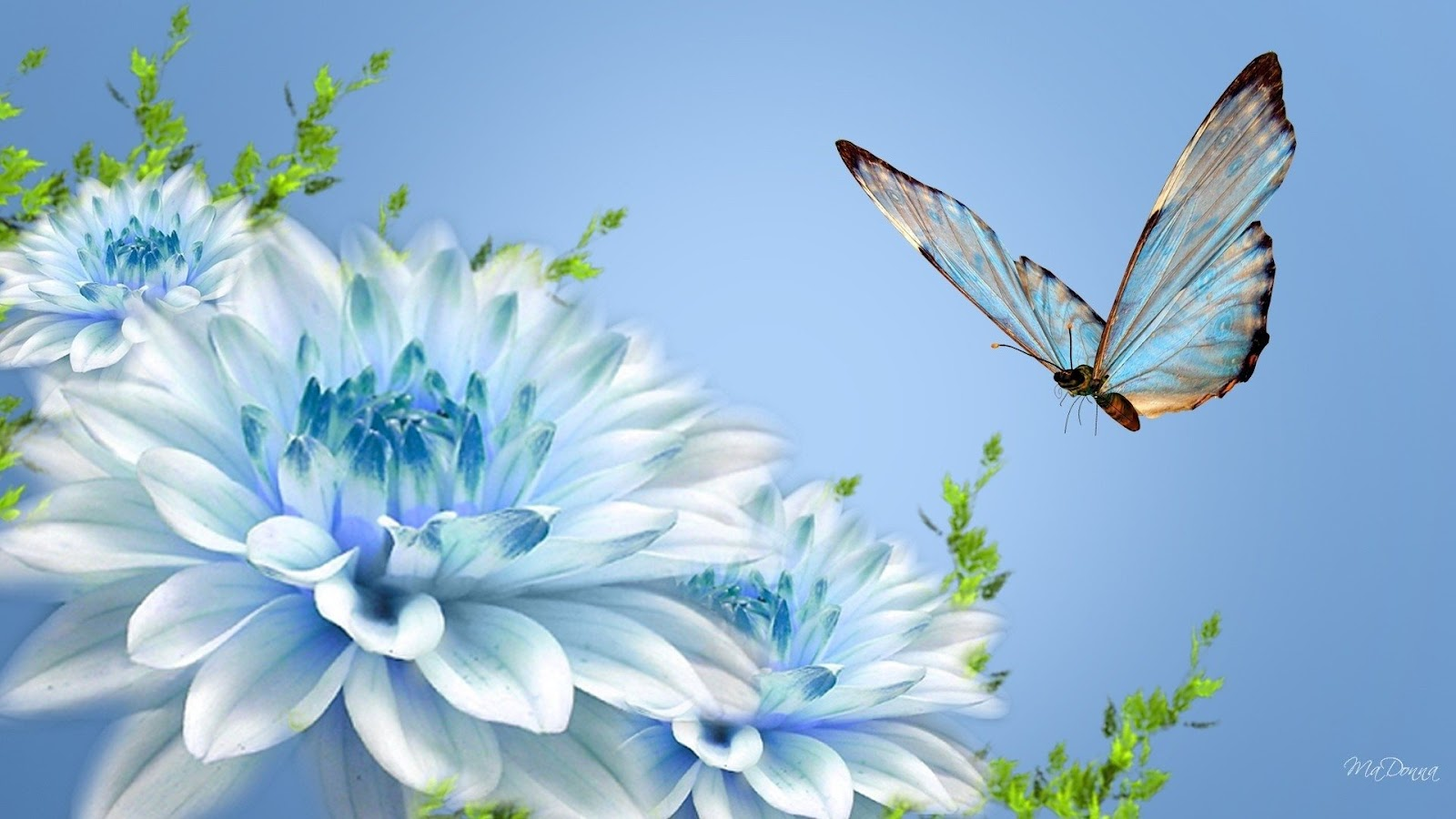 Mystery Wallpaper Blue Butterfly and Blue Flower 1600x900