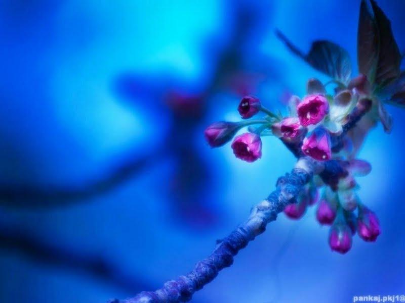 Wallpaper Pink And Blue Flowers Wallpapersafari