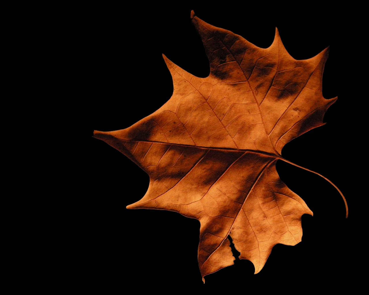 brown leaf 1280x1024 wallpaper download page 210005 1280x1024