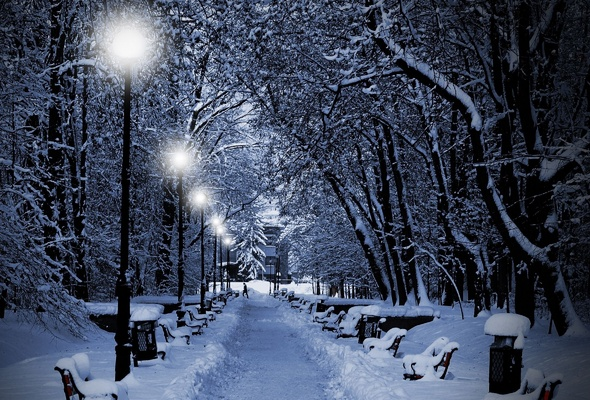 Wallpaper winter snow park bench tree forest desktop wallpaper 590x400