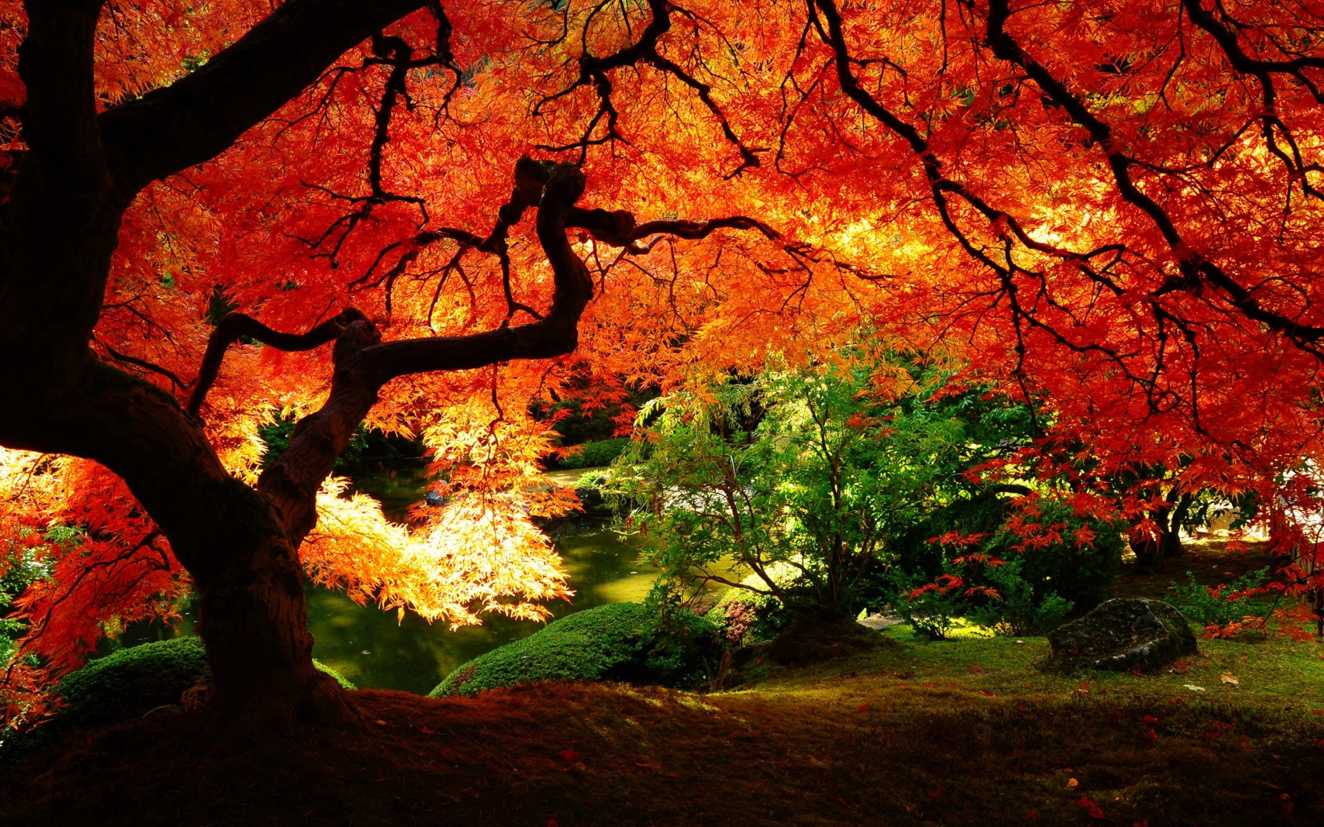Beautiful Autumn Red Leaves Wallpaper 1920x1200