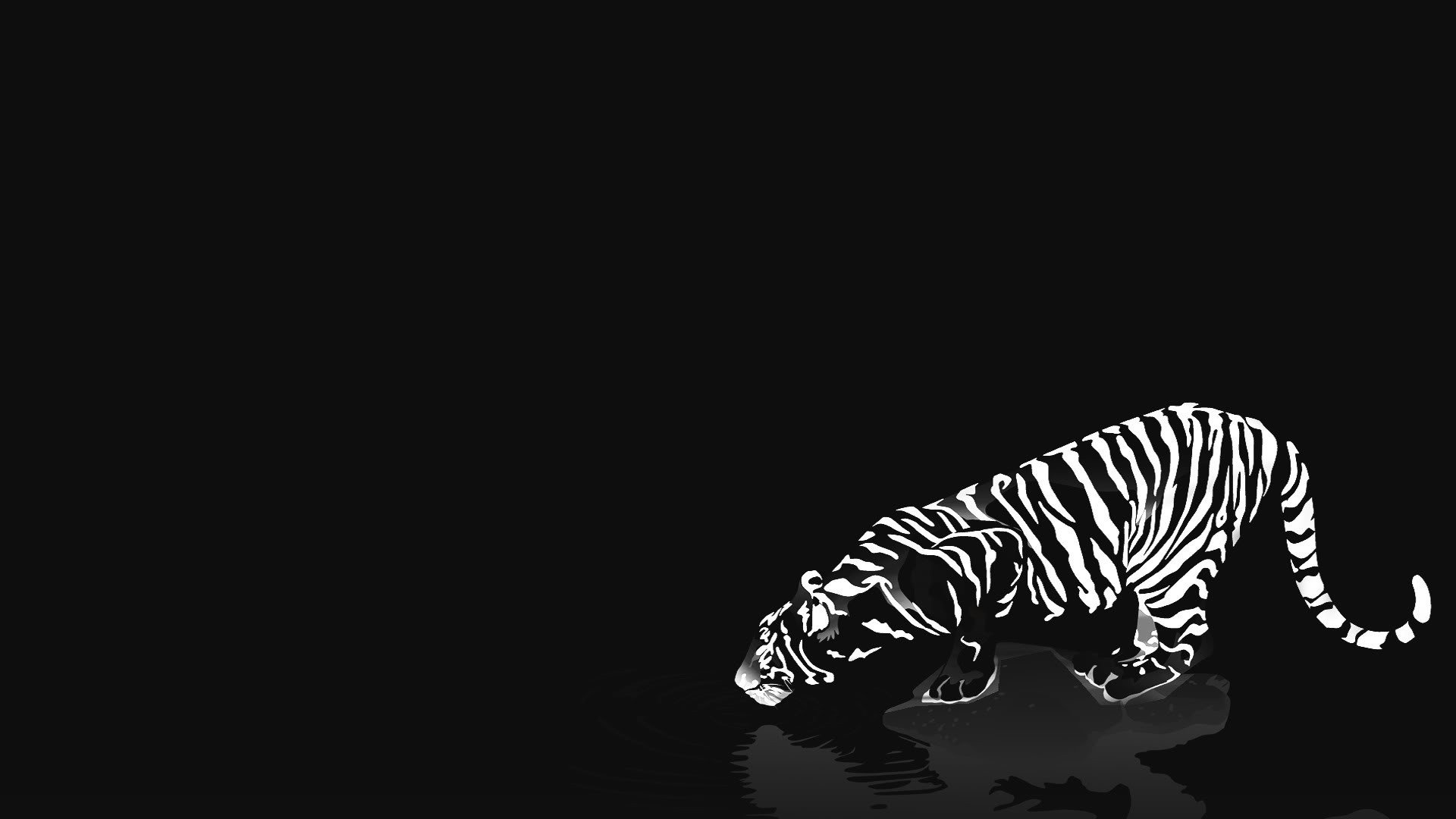 1920x1080px black and white tiger wallpaper - wallpapersafari