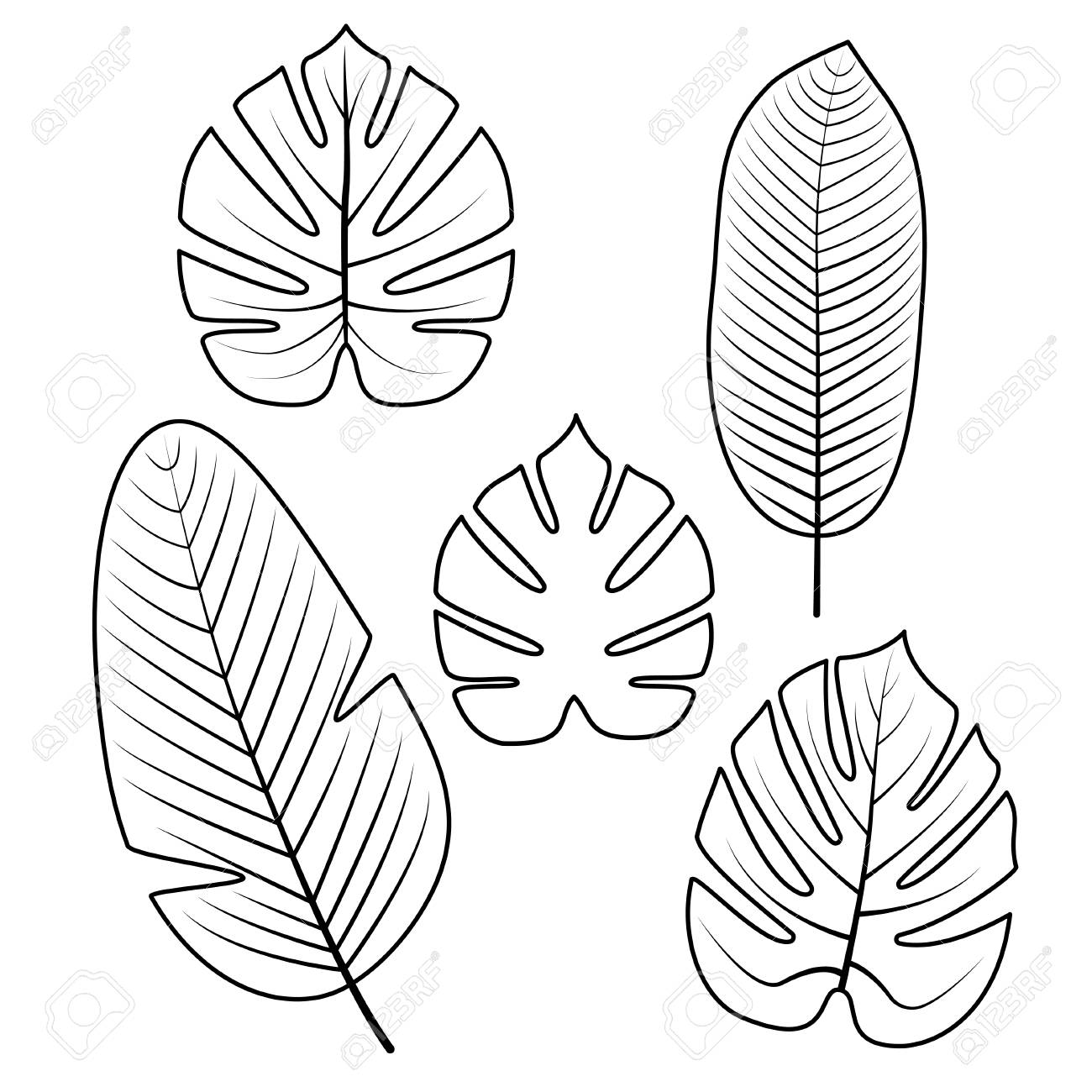 Tropical Palm Leaves Isolated On White Background Outline Vector 1300x1300