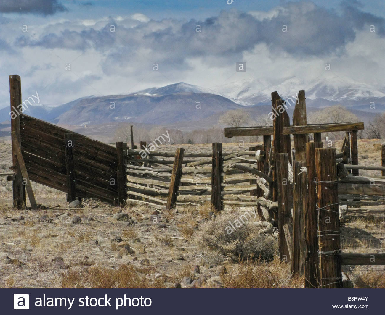 Cattle chute and corral with snow capped mountains in the 1300x1065