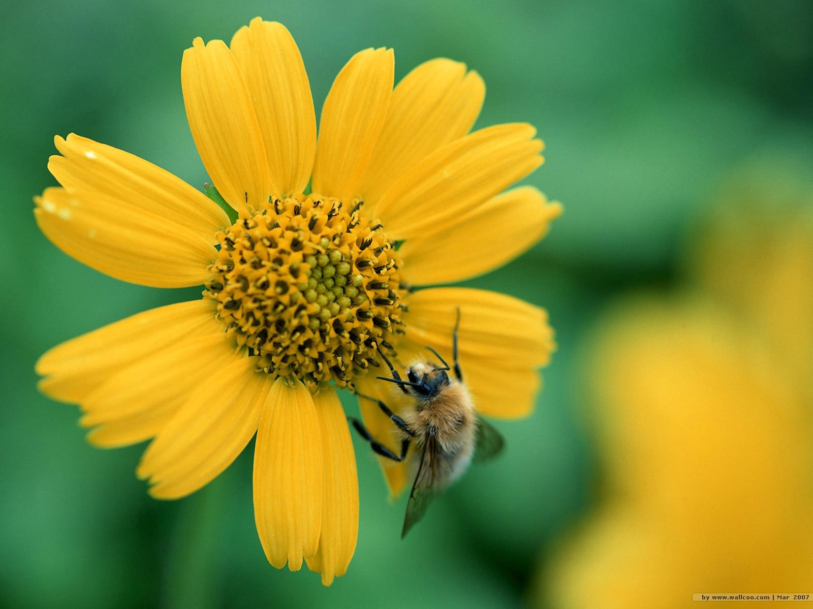 bee wallpaper 26 jpg 11 bee wallpaper 28 1600x1200