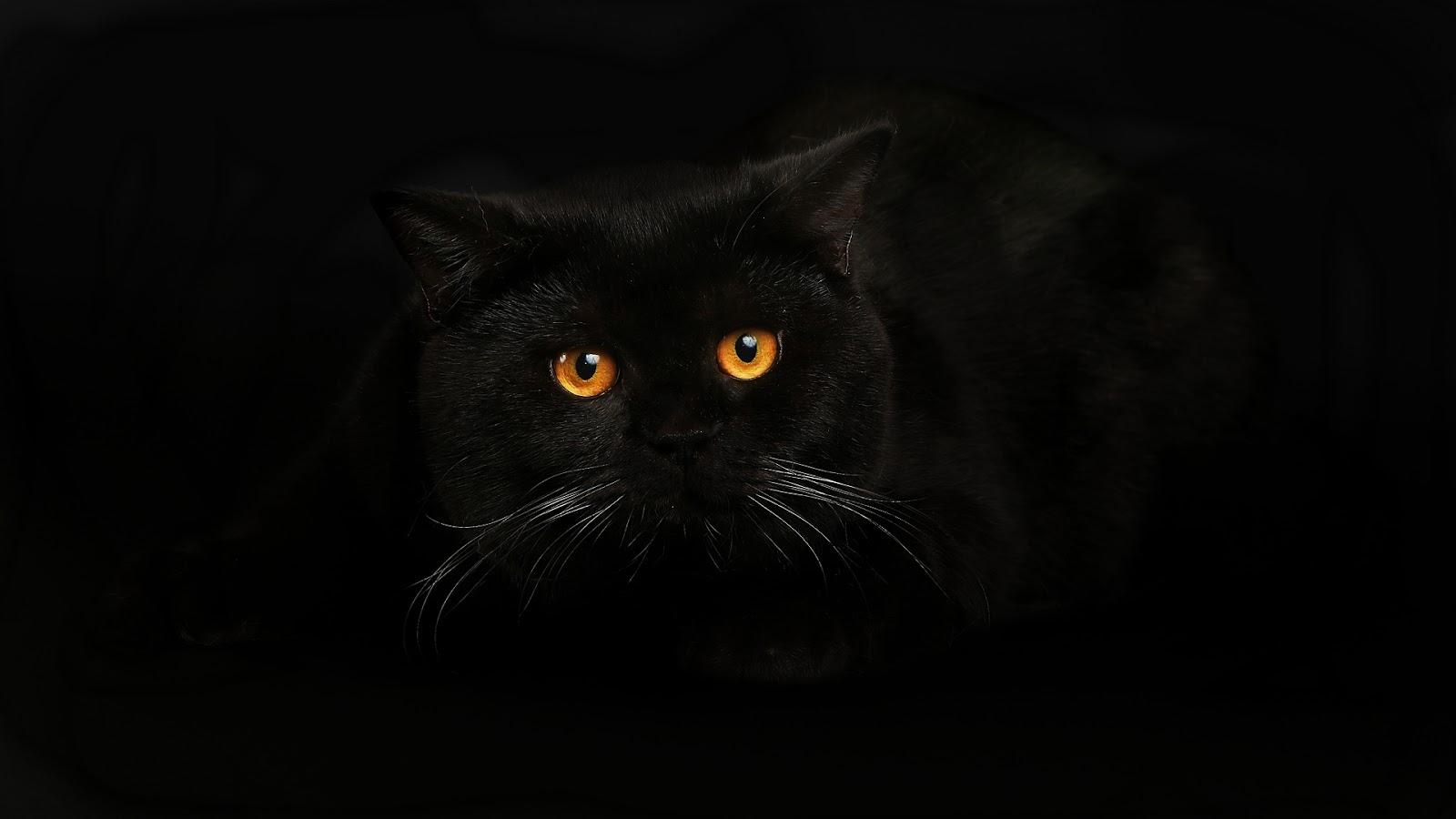 обои на рабочий стол черные кошки на черном фоне № 154886  скачать