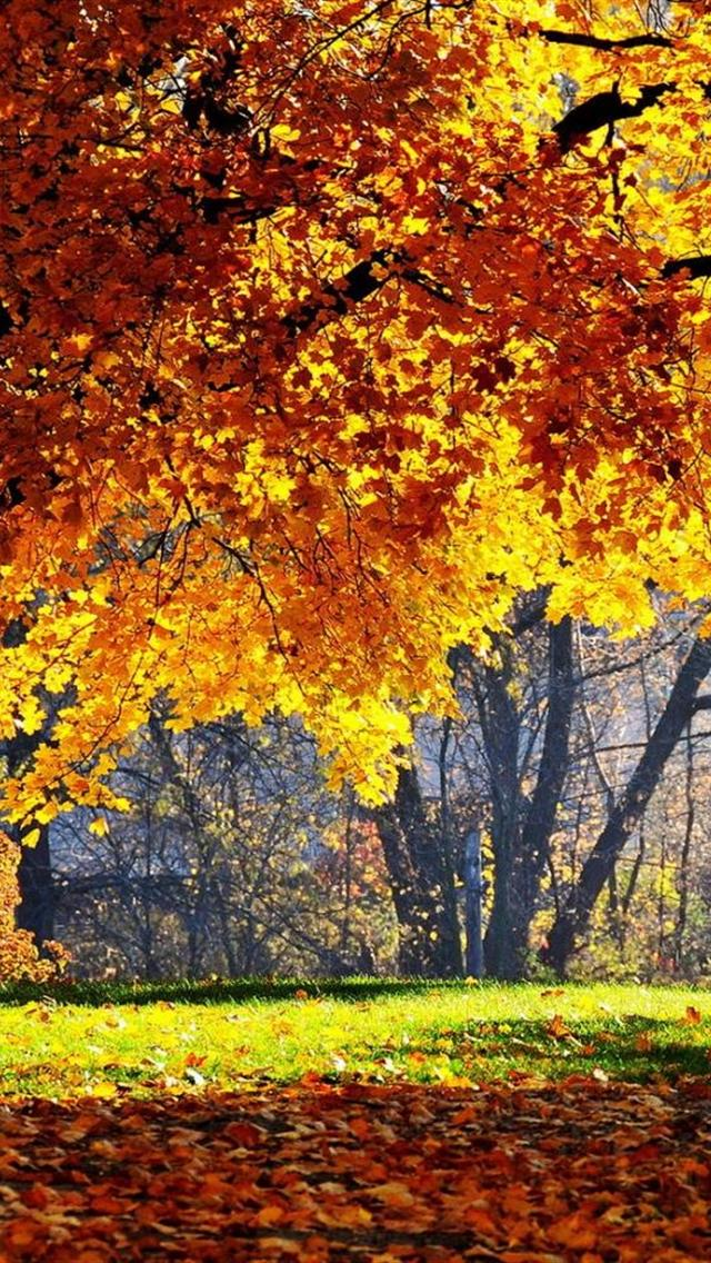 fall leaves iphone background autumn leaves art Car Pictures 640x1136