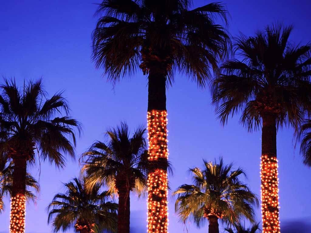 California Palm Trees Wallpaper Wallpapersafari