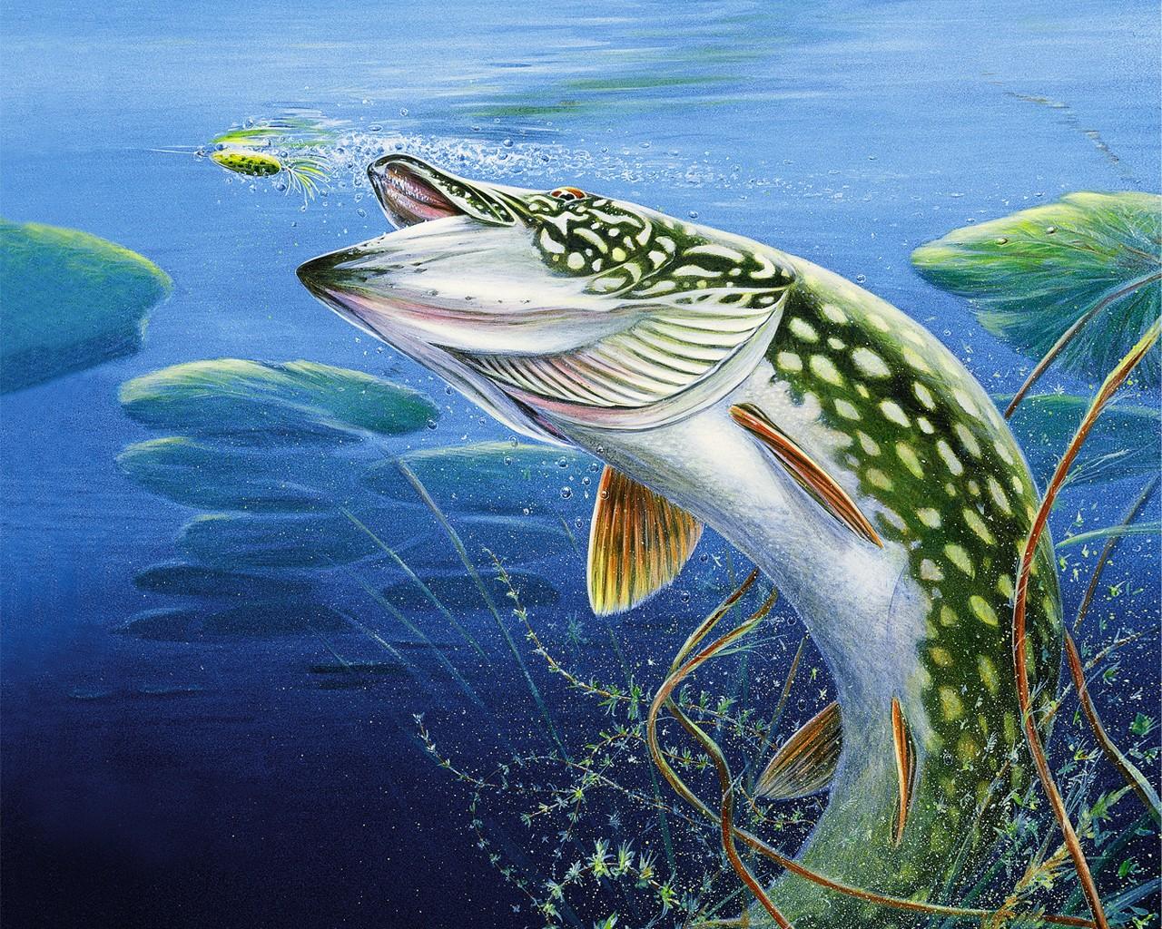 Bass Fishing Desktop Wallpapers Wallpaper 1280x1024