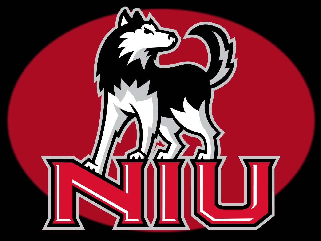 download Northern Illinois Huskies [1365x1024] for your 1365x1024