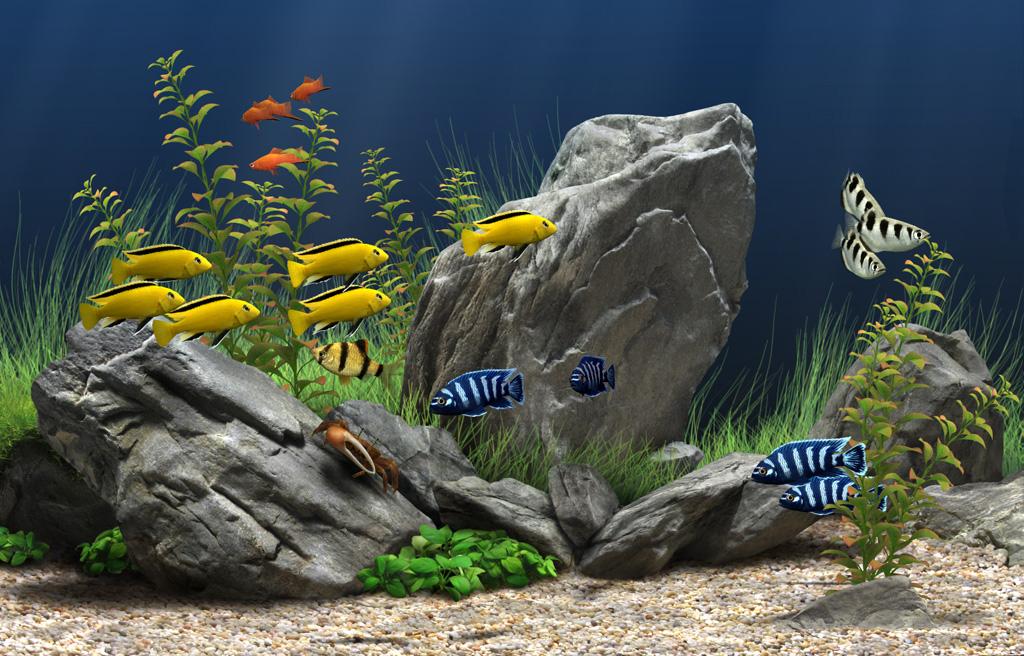 Wallpapers Fish Aquarium Wallpaper 1024x656