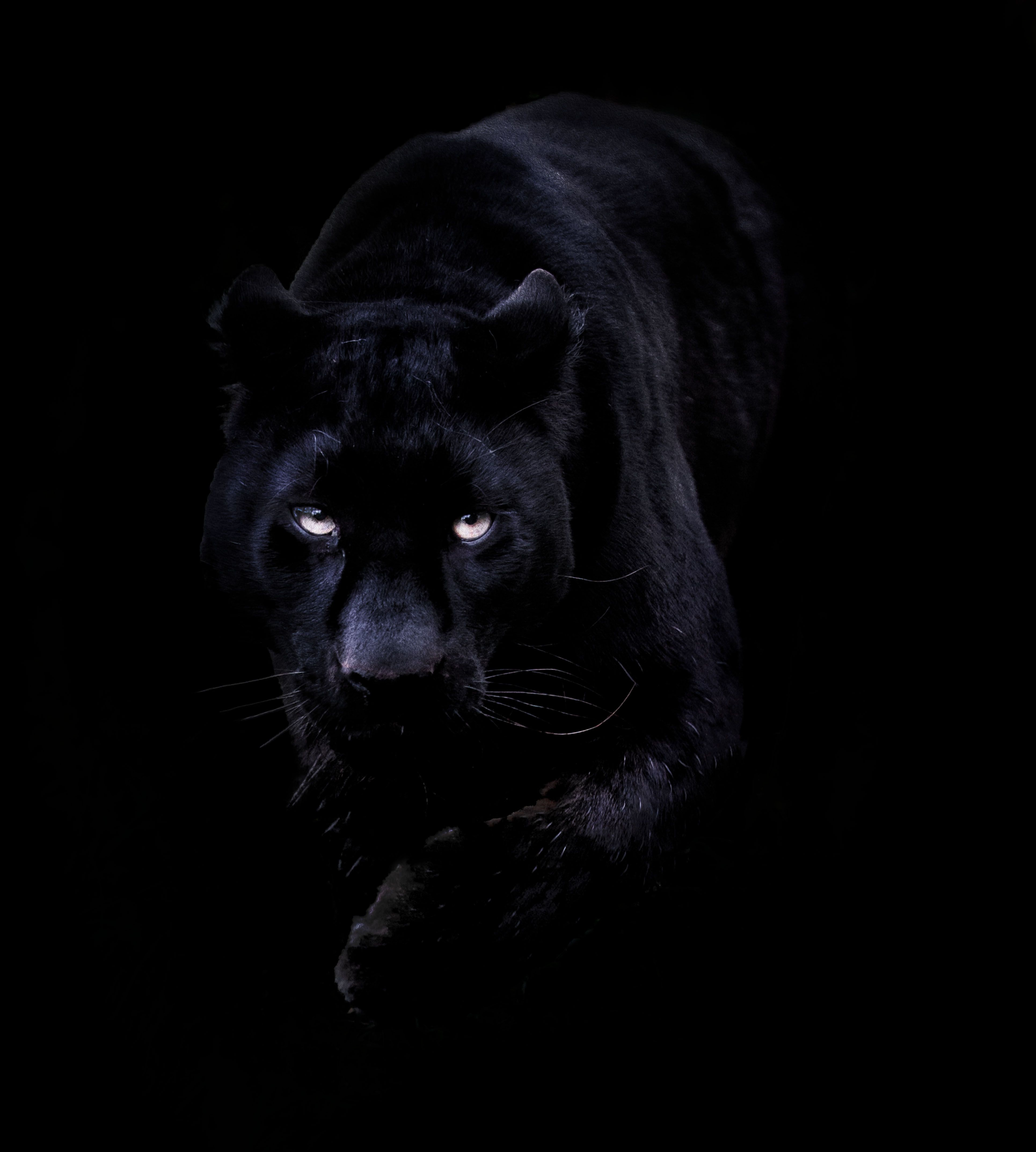 Wallpapers For Black Panther Iphone Wallpaper 3860x4290