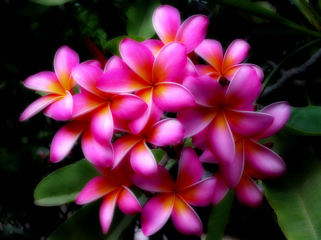 Beautiful Flower In Hawaiian Best Image Of Flower Mojoimage
