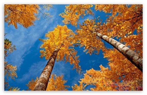 Fall Trees HD wallpaper for Standard 43 54 Fullscreen UXGA XGA SVGA 510x330