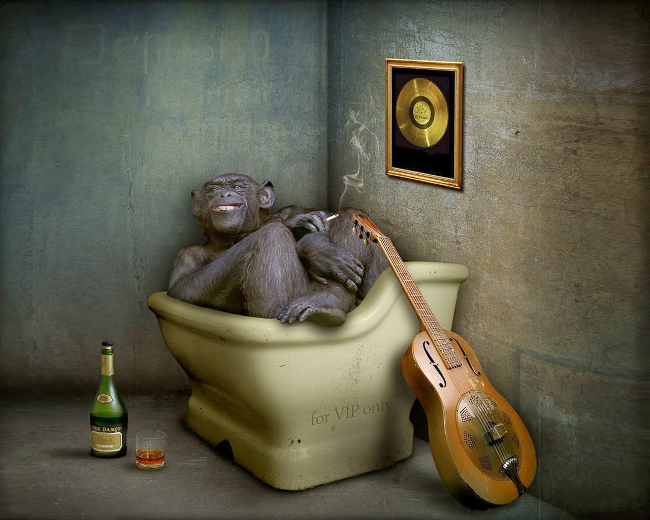 Funny Monkey In Tub Cool Creative Humour High Resolution 1280x1024
