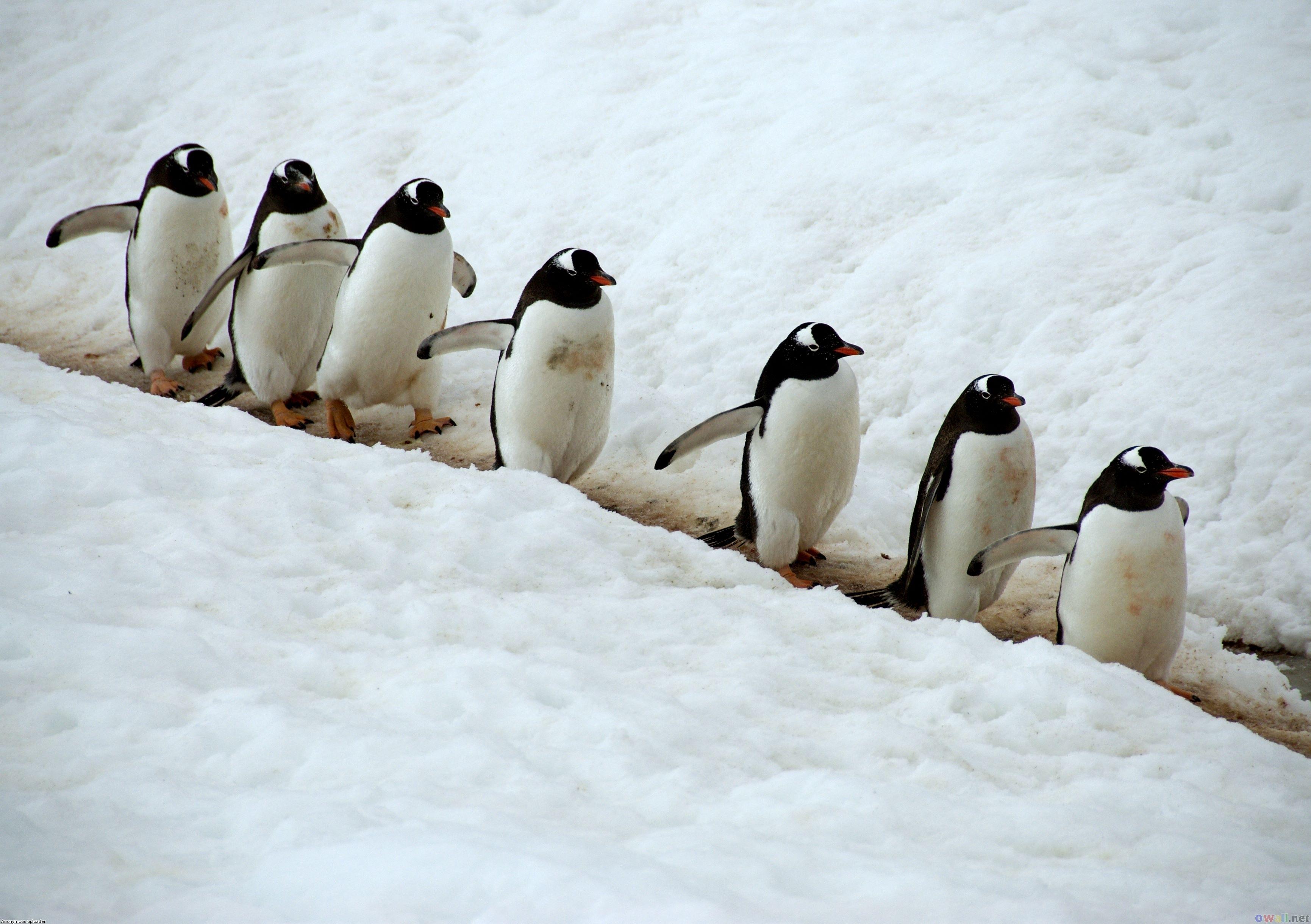 44   cute penguin wallpaper for desktop on wallpapersafari